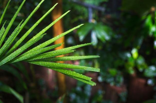 Close-up, de, molhados, folhas