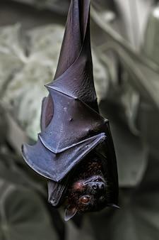 Close up de morcegos empoleirados em um galho