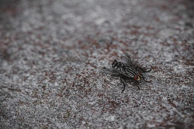 Close-up de mosca preta