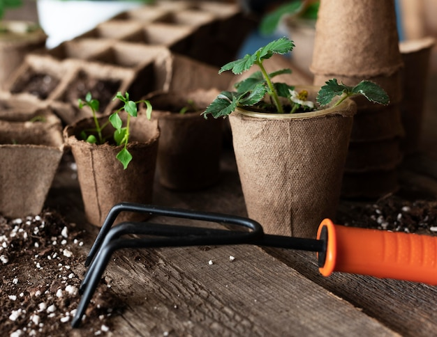 Close up de mudas de plantas
