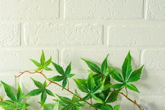 Close-up de muitas folhas verdes de uma maconha artificial, uma planta medicinal com uma parede de tijolos brancos ao fundo.