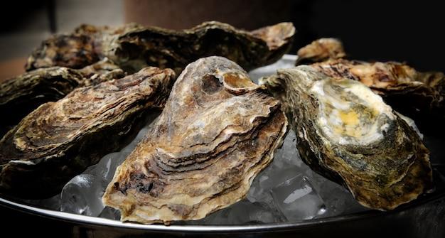 Close-up de ostras frescas em um mercado.