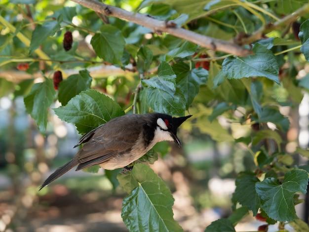 Close-up de pássaro no galho de árvore