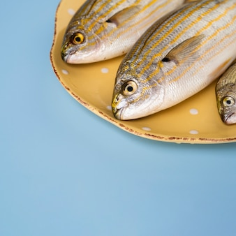 Close-up de peixes frescos em um lugar