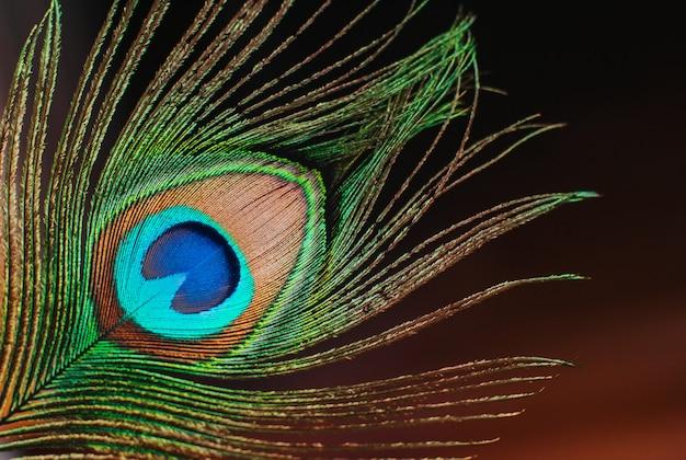 Close-up de penas de pavão