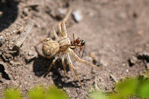 Close-up de pequena aranha no jardim