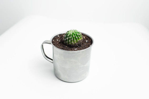 Close-up de pequeno cacto verde em vaso em caneca de aço na superfície branca.