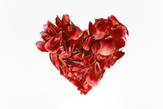 Close-up de pétalas de flores em forma de coração, lava exuberante de cor, isolada no fundo branco.