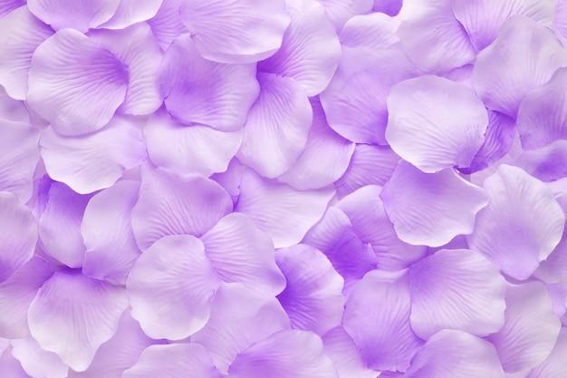 Close-up de pétalas roxas de flores violetas