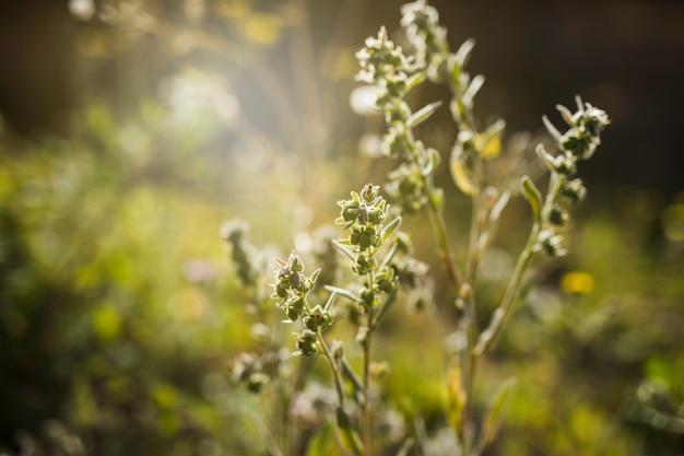 Close-up, de, planta