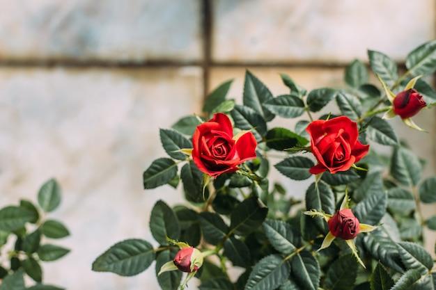 Close-up de plantas em vasos em estufa