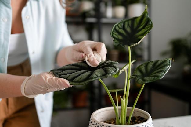 Close-up de plantas femininas