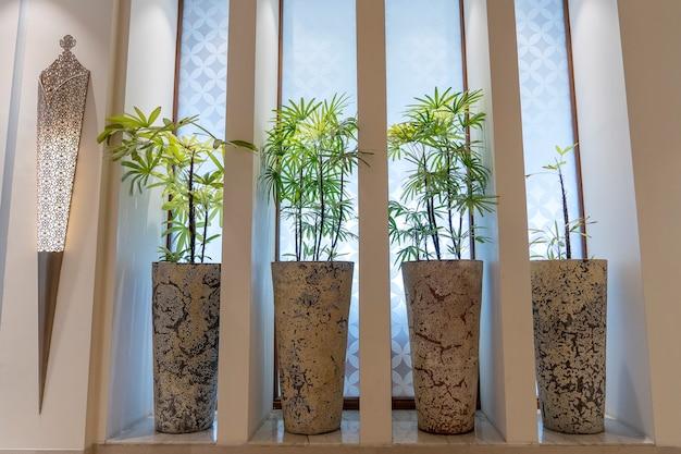 Close up de plantas tropicais verdes em vasos na ilha de zanzibar, tanzânia, áfrica oriental
