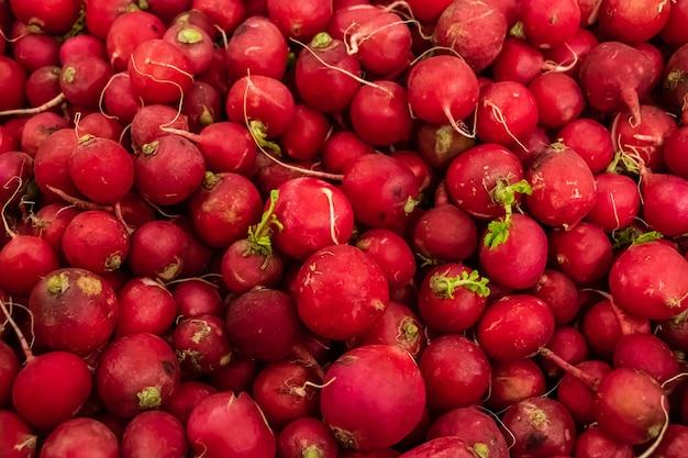 Close-up de rabanete jovem vermelho apetitoso. cultive vegetais para uma dieta saudável.