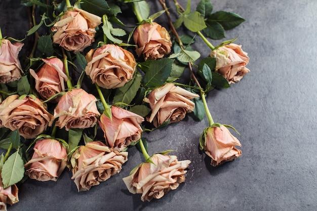 Close-up de rosas laranja e rosa.