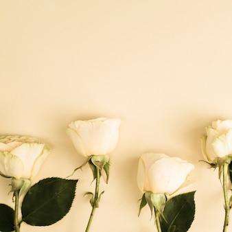 Close-up de rosas naturais