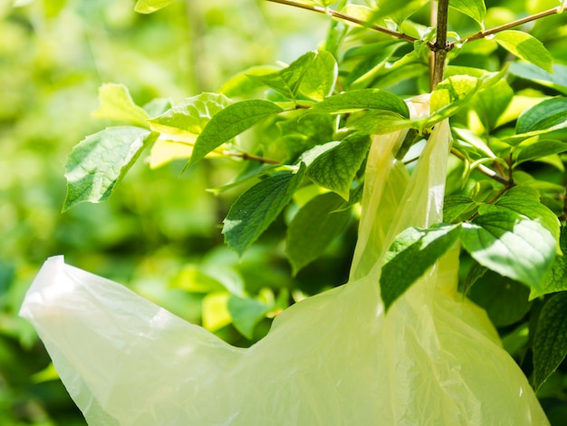 Close-up de saco de plástico amarelo pendurado no galho de árvore