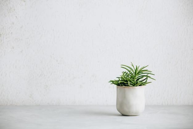 Close-up de suculenta pequena no pote de cerâmica na moda contra parede branca