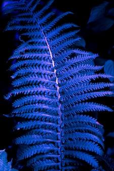 Close-up de textura de folha de samambaia na moda em tons de néon