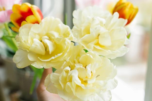 Close-up de tulipas primavera amarelas terry