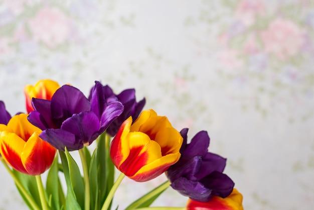 Close-up de tulipas roxas, vermelhas e amarelas. fundo de flor de primavera