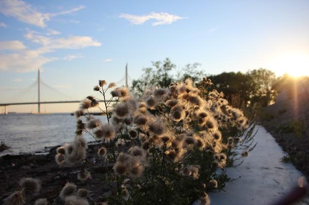 Close up de um arbusto cantante ao pôr do sol