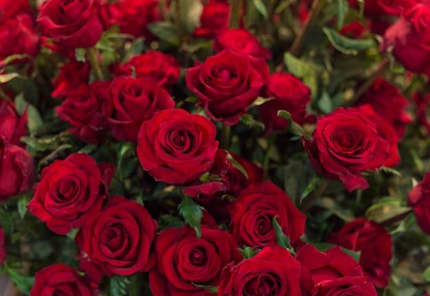 Close-up, de, um, bonito, buquet, de, rosas vermelhas, fundo