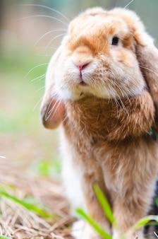 Close-up de um coelho na floresta