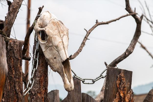Close-up de um crânio de vaca branca com chifres no tronco de madeira