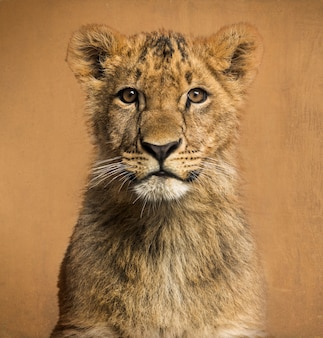 Close-up de um filhote de leão na frente de um fundo vintage