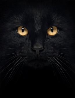Close-up de um gato preto, olhando para a câmera, isolada no branco
