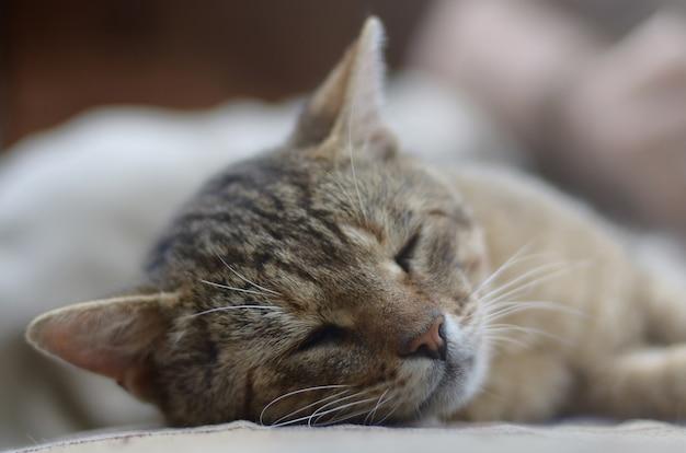 Close-up de um gato tigrado triste e preguiçoso cochilando no sofá ao ar livre na noite