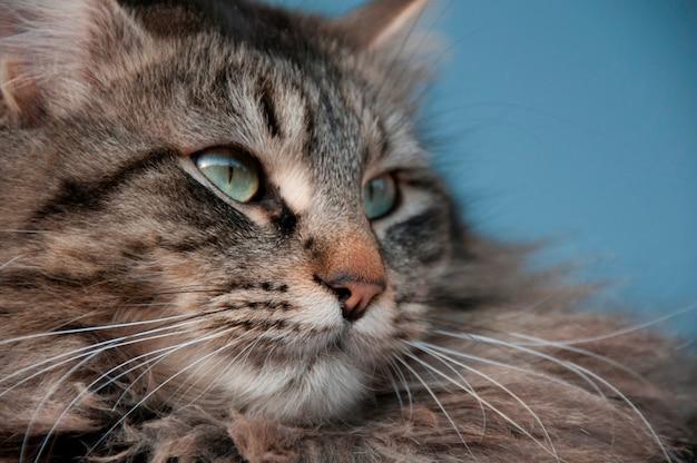 Close-up, de, um, gato