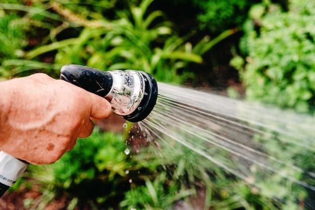 Close-up, de, um, homem, aguando, seu, jardim, com, um, mangueira, jorrando, água