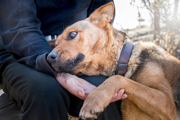 Close-up de um homem idoso segurando a pata de um cachorro na mão