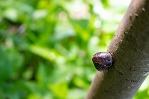 Close-up de um lindo caracol. caracol rastejando ao longo do tronco.