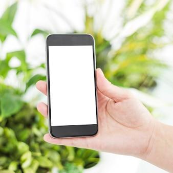Close-up, de, um, mão mulher, segurando, telefone móvel, com, em branco, tela branca