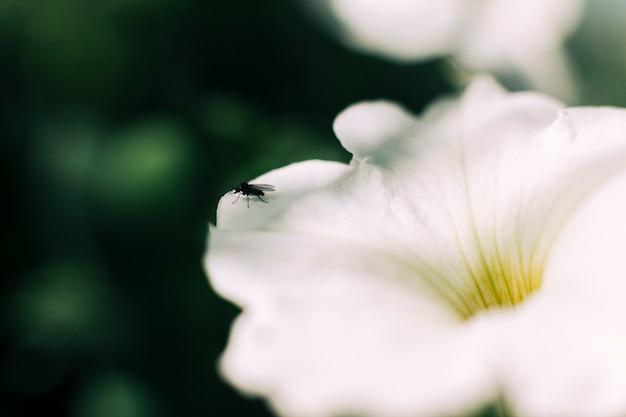 Close-up, de, um, mosca, branco, flor