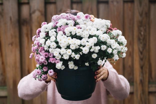 Close-up, de, um, mulher segura, planta potted, de, cor-de-rosa branco, aster, flores, frente, dela, rosto