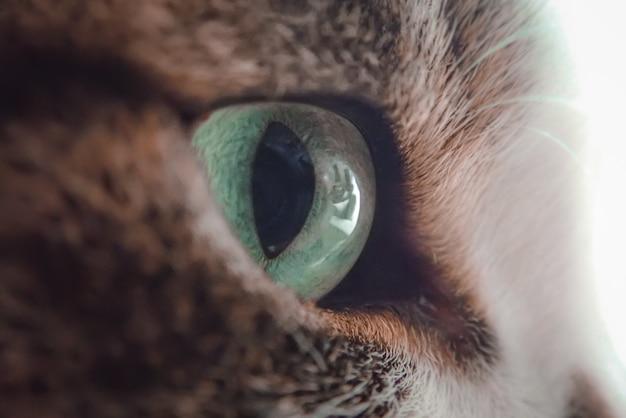 Close up de um olho verde de um gato preto e branco