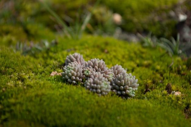 Close-up, de, um, remendo, de, musgo verde