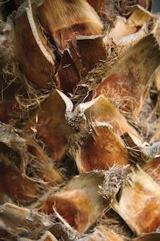 Close up de um tronco de palmeira, uma textura.