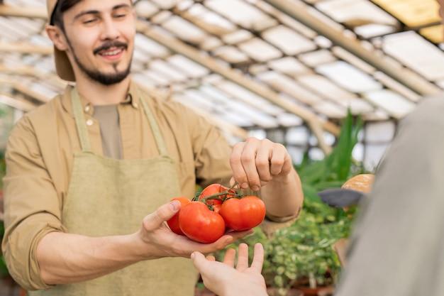 Close-up de um vendedor de fazenda jovem e positivo mostrando tomates maduros no galho para o cliente no mercado do fazendeiro