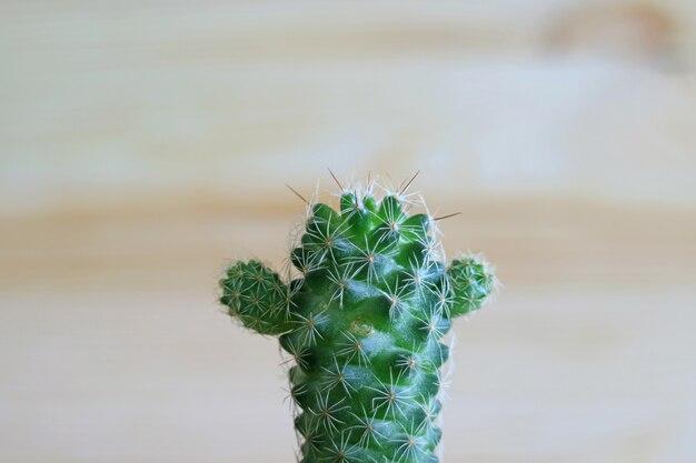 Close-up, de, um, verde, mini, cacto, plantas
