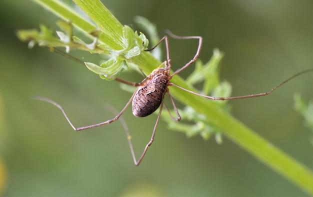 Close-up de uma aranha em uma planta