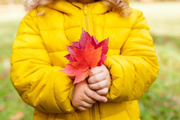 Close-up de uma criança, uma menina, segurando folhas vermelhas em um dia de outono