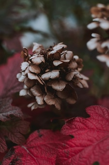 Close up de uma flor roxa de grifola frondosa cercada por folhas roxas em uma floresta