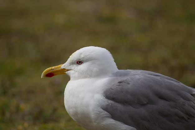 Close-up de uma gaivota branca e cinza