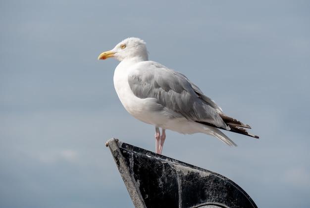 Close up de uma gaivota no cimo do poste de luz