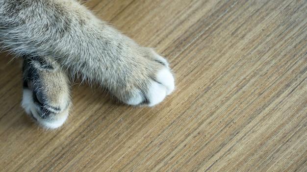 Close-up de uma pata de um gato fofo